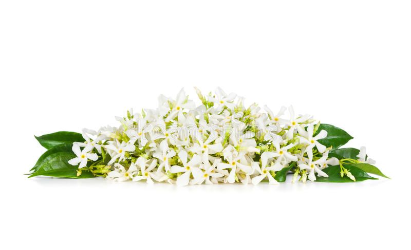 Flores del jazmín fotografía de archivo