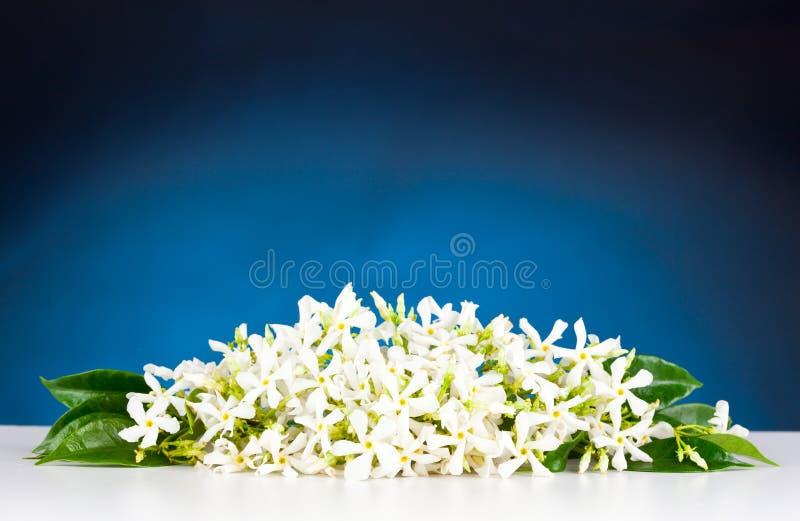 Flores del jazmín imagenes de archivo
