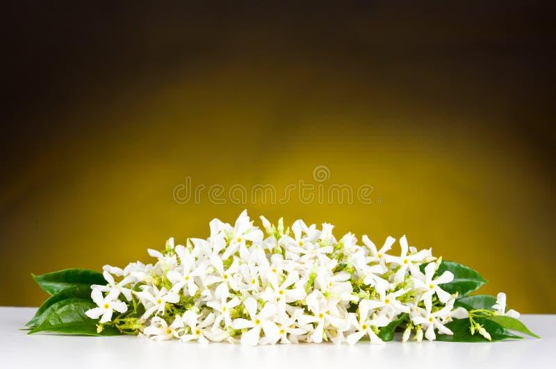 Flores del jazmín imágenes de archivo libres de regalías