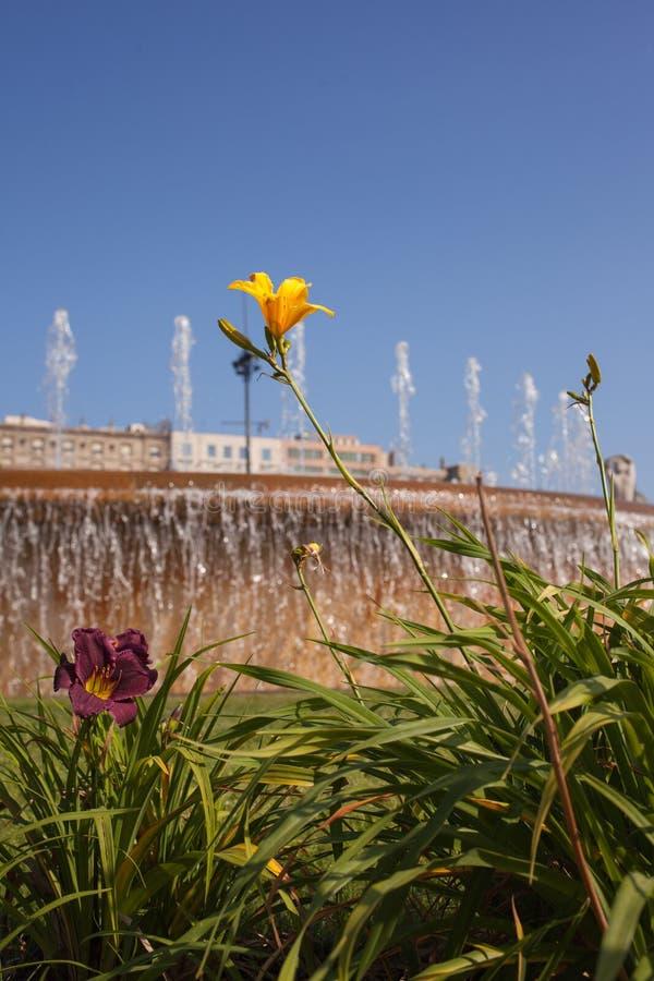 Flores del lirio delante de las fuentes de Barcelona imagenes de archivo