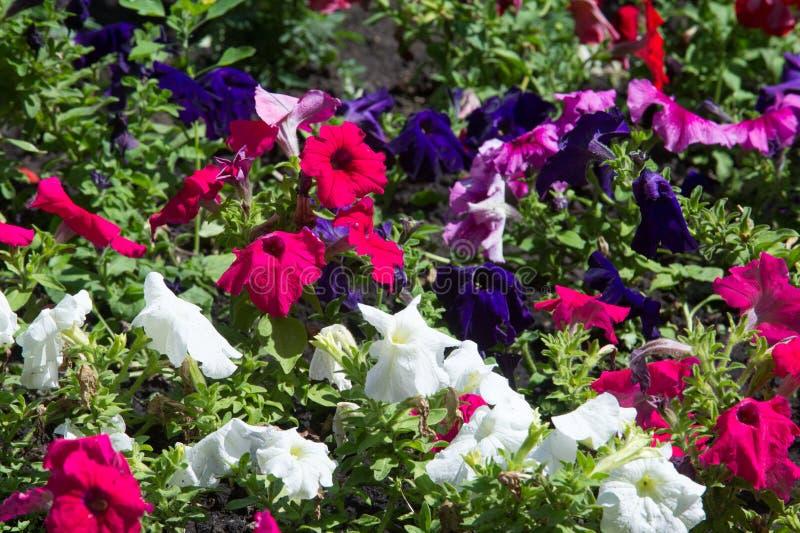 flores del macizo de flores Cama plantada del jardín de flores bajo la forma de A.C. imagen de archivo libre de regalías