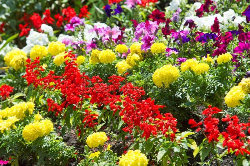 flores del macizo de flores Cama plantada del jardín de flores bajo la forma de A.C. foto de archivo libre de regalías