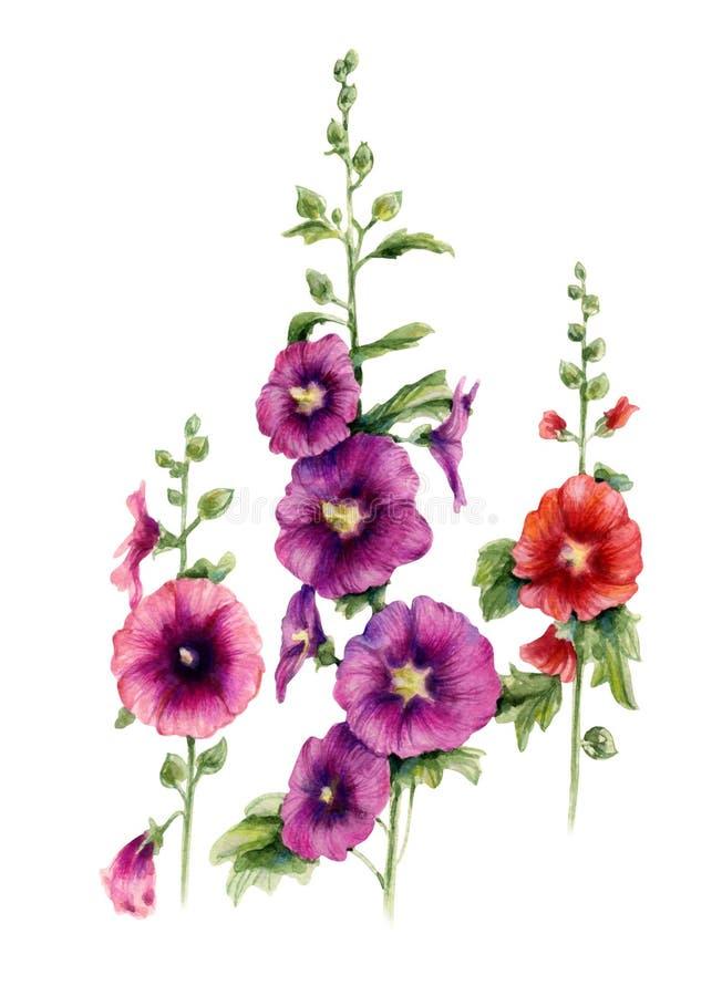 Flores del Malva Ejemplo botánico de la acuarela ilustración del vector