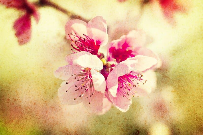 Flores del melocotón de Grunge fotos de archivo