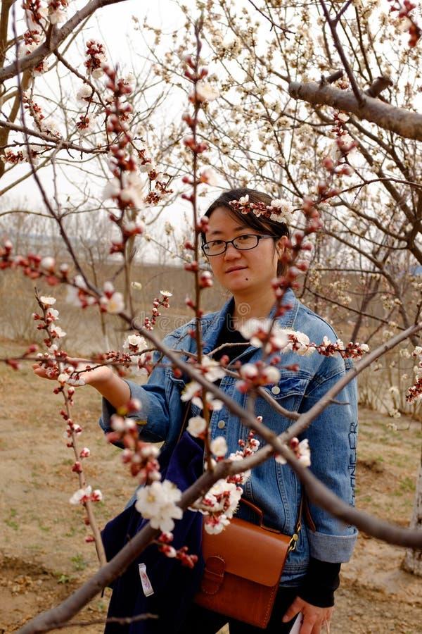 Flores del melocotón que florecen en la primavera fotografía de archivo