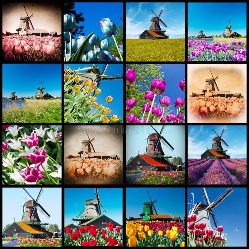 Flores del molino de viento y del tulipán de Holanda fotografía de archivo libre de regalías