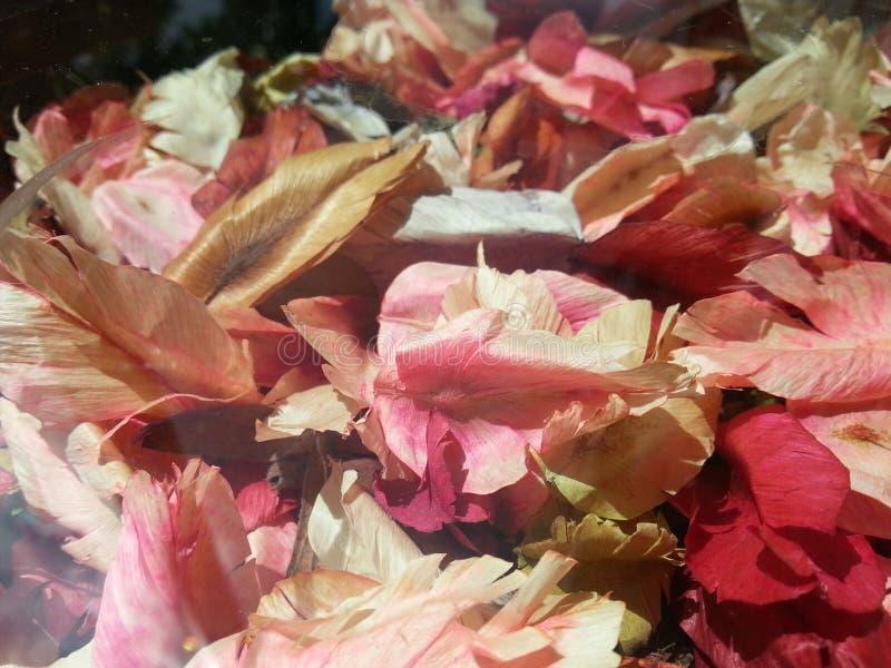 Flores del pétalo foto de archivo