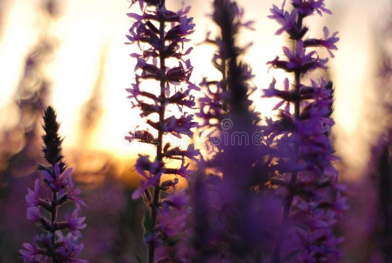 Flores del patio trasero fotos de archivo