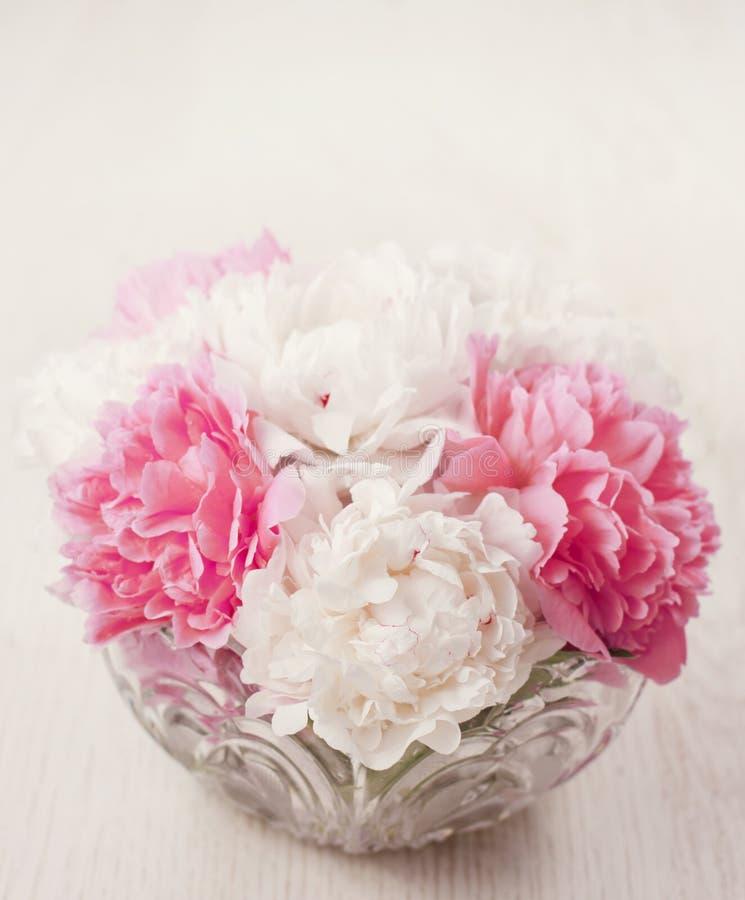 Flores del Peony fotos de archivo