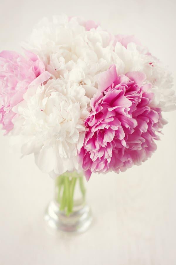 Flores del Peony imágenes de archivo libres de regalías