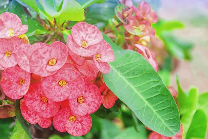 Flores del Poi Sian imagenes de archivo