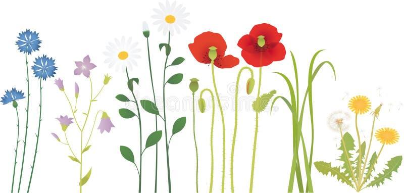 Flores del prado stock de ilustración
