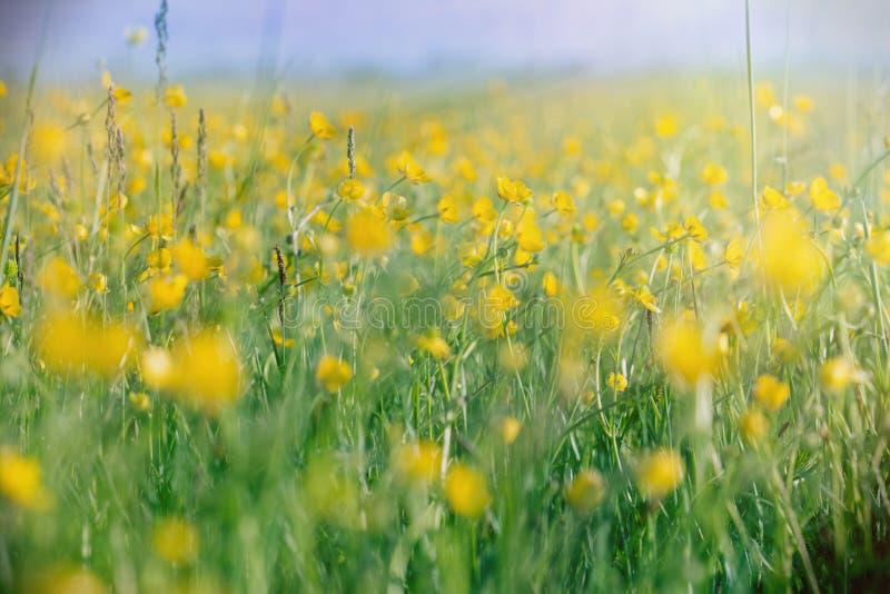 Flores del prado encendidas por los rayos del sol foto de archivo