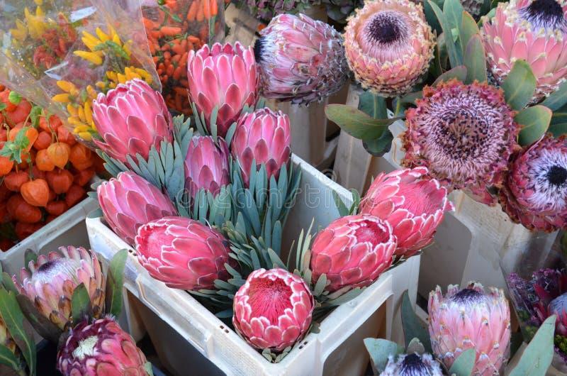 Flores del Protea en el mercado de un granjero imagen de archivo
