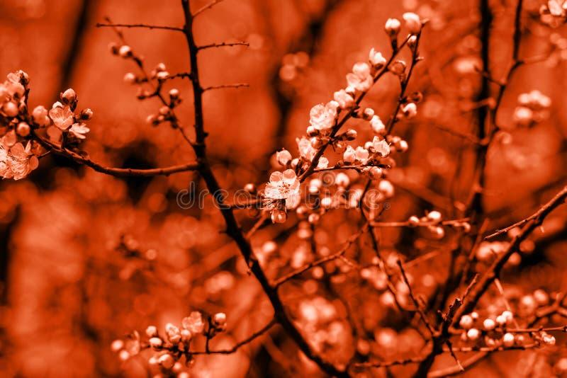 Flores del ?rbol del flor sobre fondo de la naturaleza Apenas llovido encendido Fondo de la primavera con el foco suave Entonado  imagen de archivo