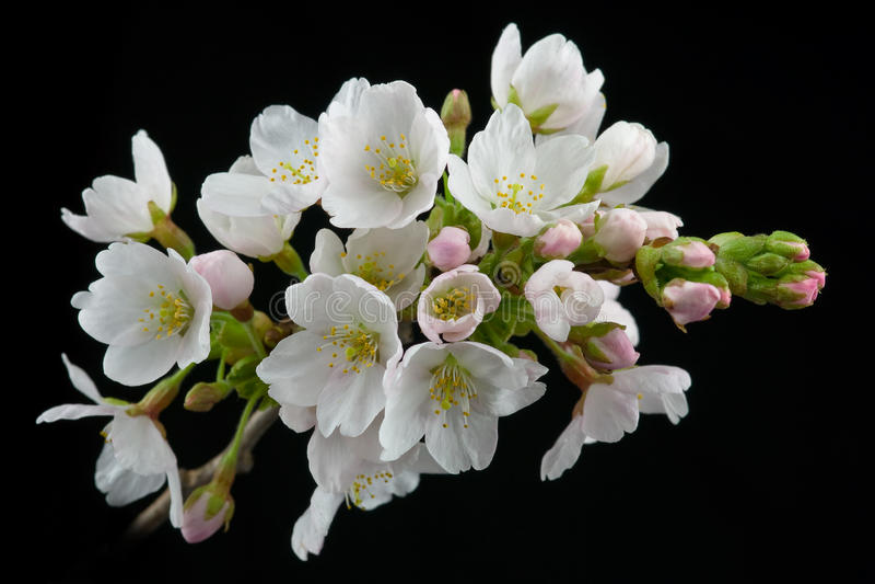 Flores del resorte fotografía de archivo