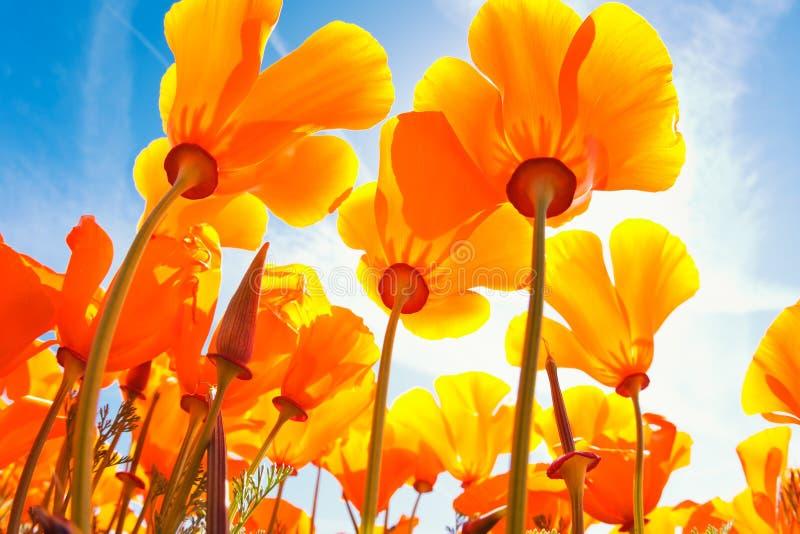 Flores del resorte imagenes de archivo