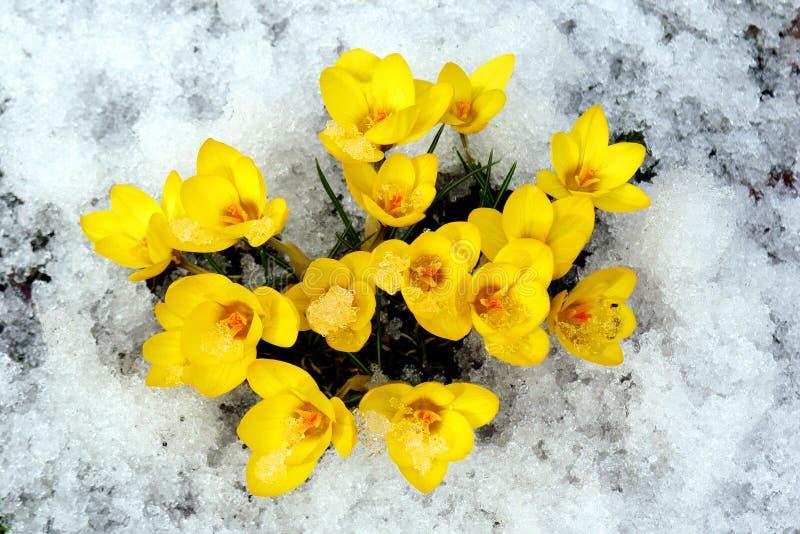 Flores del resorte. imagen de archivo libre de regalías
