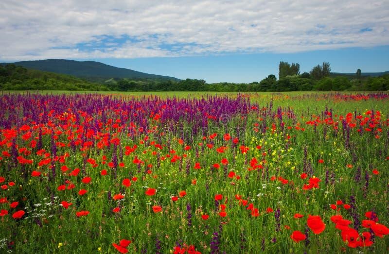 Flores del resorte en campo Paisaje hermoso imagenes de archivo
