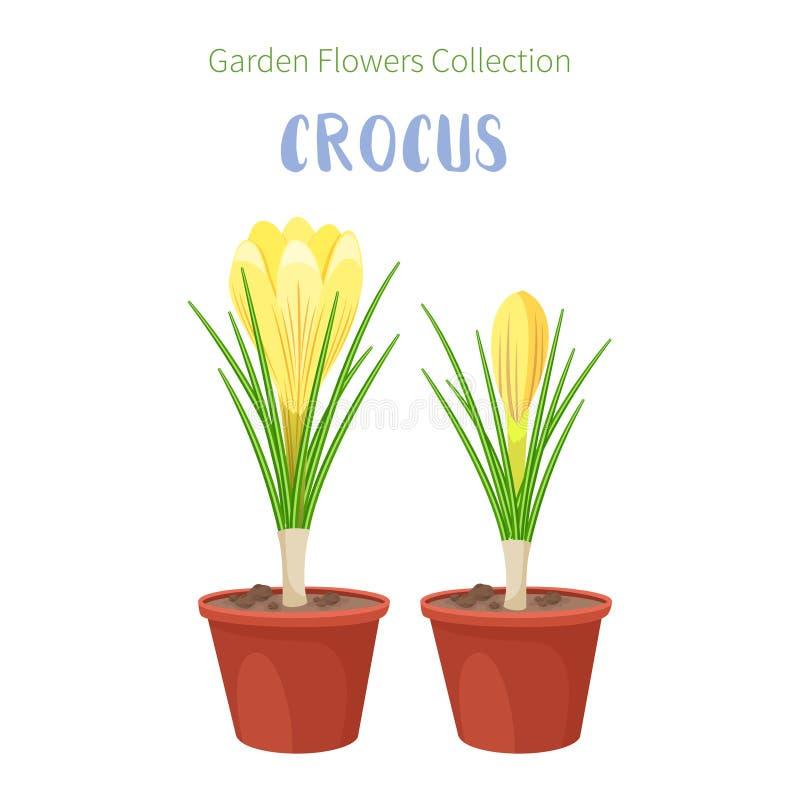 Flores del resorte en crisoles de flor Iris, lirios del valle, tulipanes, narcissuses, azafranes y otras primaveras Jardín stock de ilustración