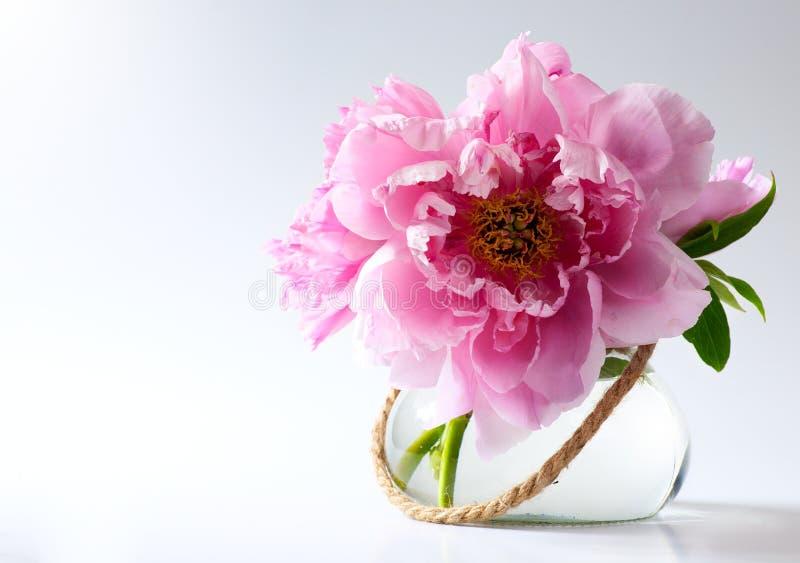 Flores del resorte en florero en el fondo blanco fotografía de archivo libre de regalías