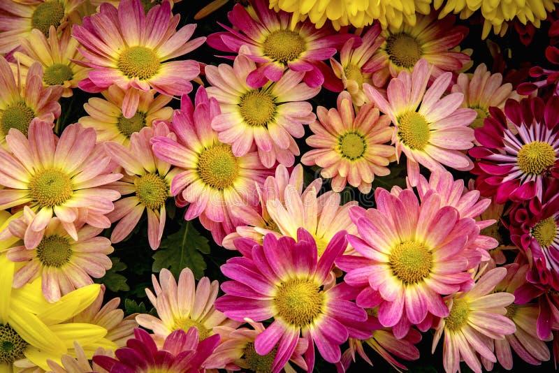 Flores del resorte en un jardín foto de archivo libre de regalías
