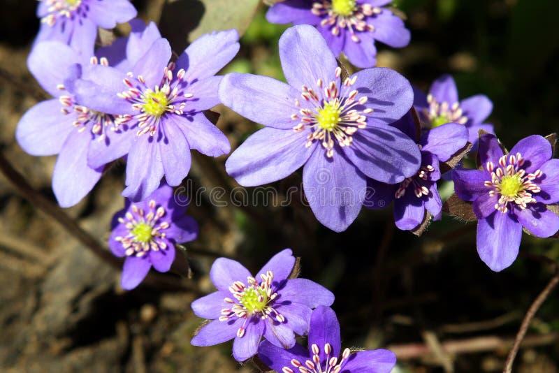 Flores del resorte en un jardín. foto de archivo libre de regalías