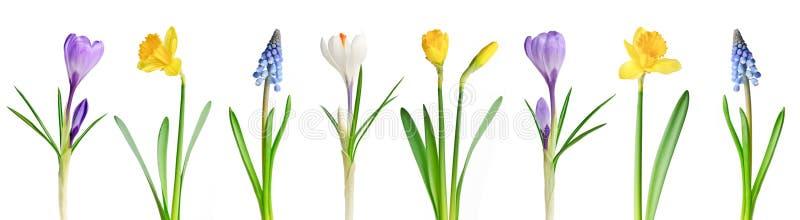 Flores del resorte en una fila imágenes de archivo libres de regalías