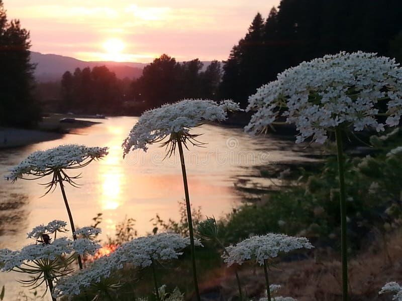Flores del Riverbank fotos de archivo