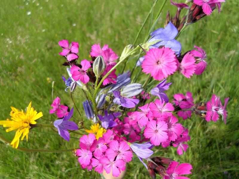 Flores del rosa salvaje imagenes de archivo