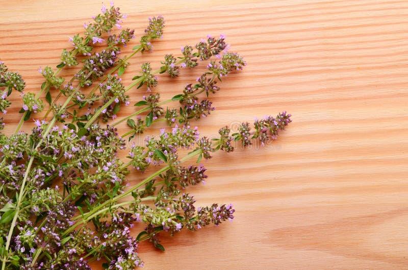 Flores del tomillo foto de archivo