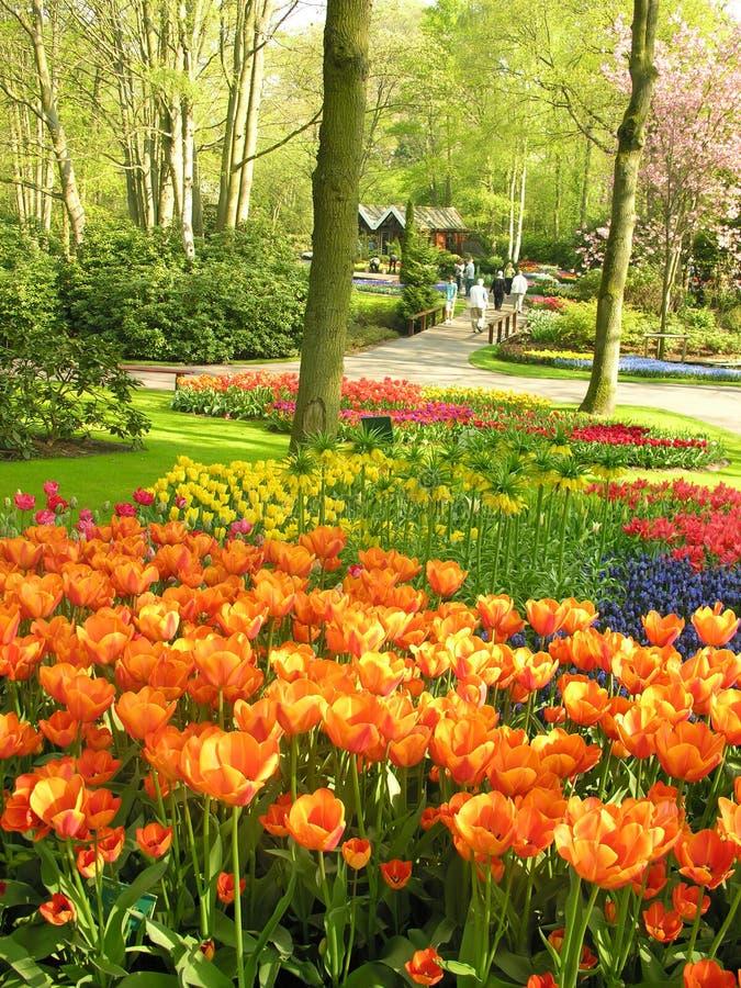 Flores del tulipán en parque fotografía de archivo