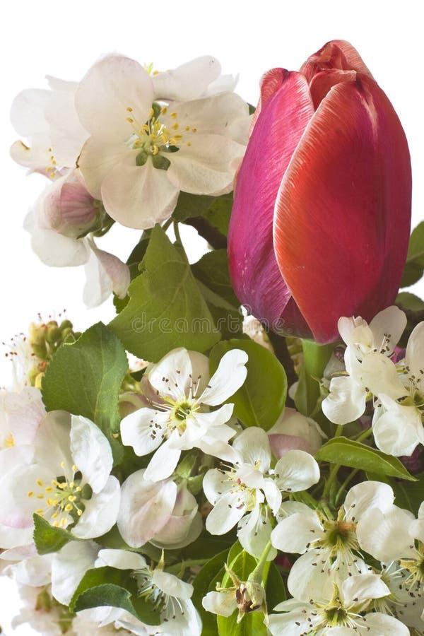 Flores del tulipán, lulic y de la manzana foto de archivo libre de regalías