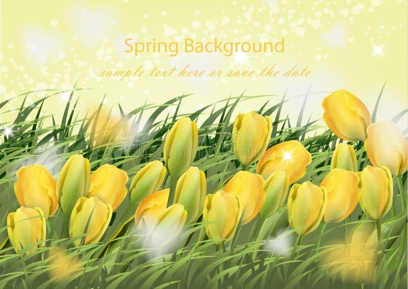 Flores del tulipán y fondo amarillos de la primavera del vector de la hierba verde realista ilustración del vector