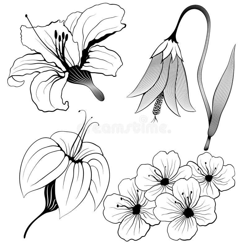 Flores del vector fijadas ilustración del vector