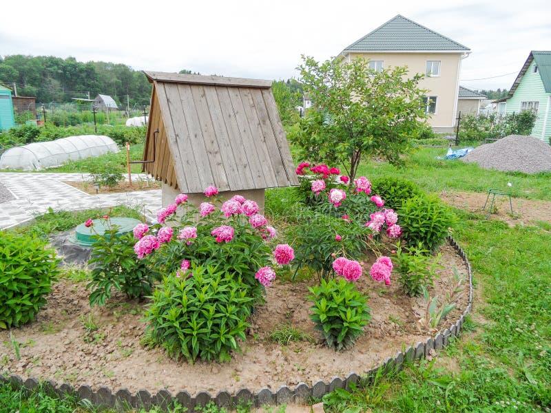 Flores del verano foto de archivo