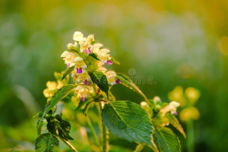 Flores del verano en el prado E Prado del Wildflower fotografía de archivo