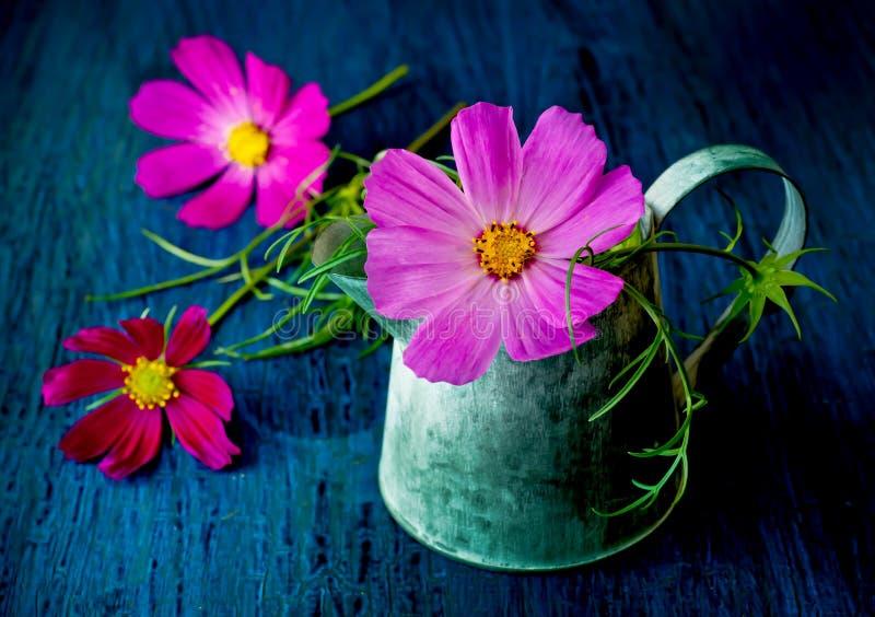 Flores del verano en la regadera decorativa del jardín imagen de archivo