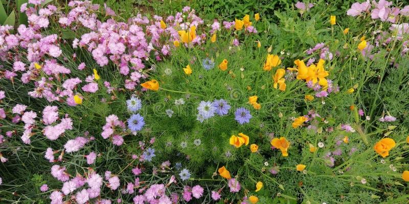Flores del verano Wildflowers brillantes en el fondo de la hierba verde imagenes de archivo