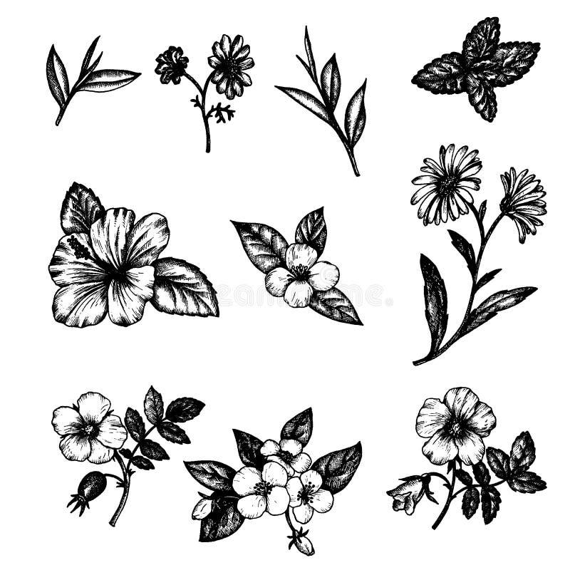 Flores del vintage del vector stock de ilustración