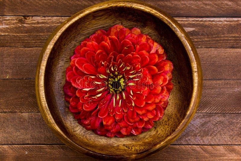 Flores del Zinnia imagen de archivo libre de regalías