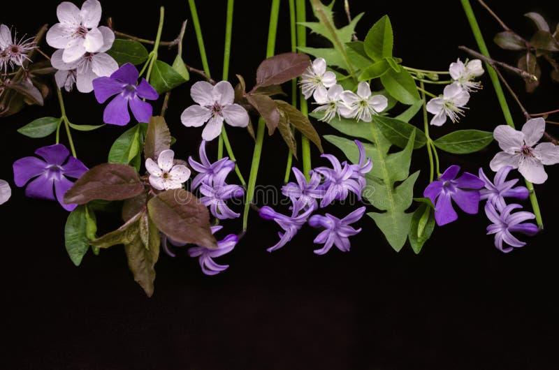 Flores delicadas da mola, jacintos roxos, pervinca, grupos das flores da ameixa e flores de cerejeira no preto fotos de stock