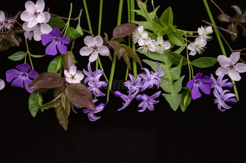 Flores delicadas de la primavera, jacintos púrpuras, bígaro, manojos de flores del ciruelo y flores de cerezo en negro fotos de archivo