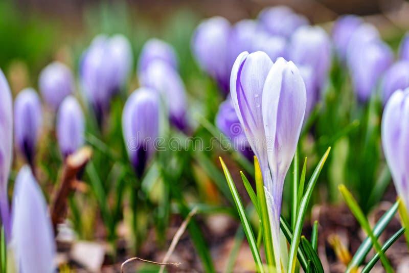 Flores delicadas del bosque Fondo que se casa floral hermoso imagen de archivo libre de regalías