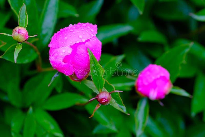 Flores deliciosas imagens de stock