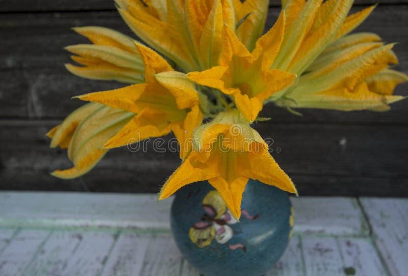 Flores deliciosas amarelas finas delicadas do abobrinha foto de stock