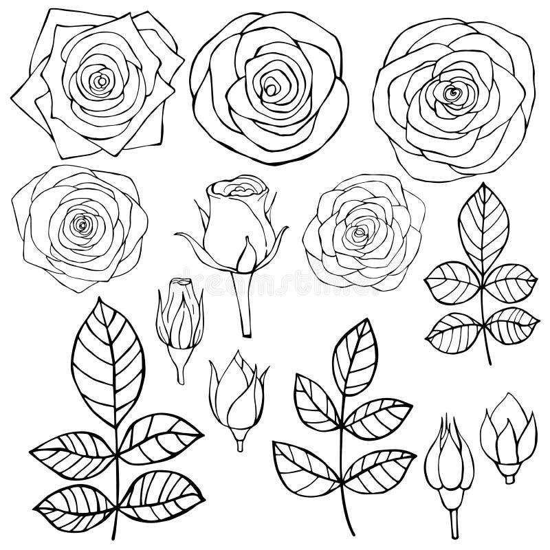 Flores desenhadas mão rosas Ilustração do esboço do vetor ilustração do vetor