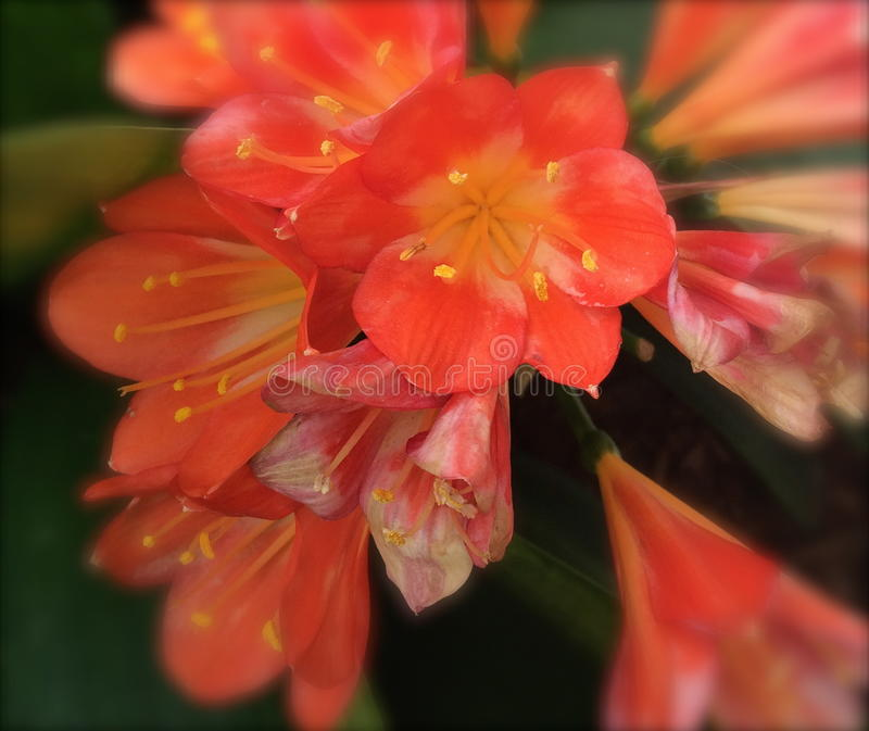 Flores desvanecidas fotos de stock