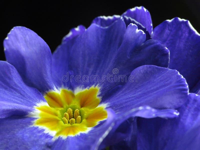 flores detal macro do jardim da flor foto de stock