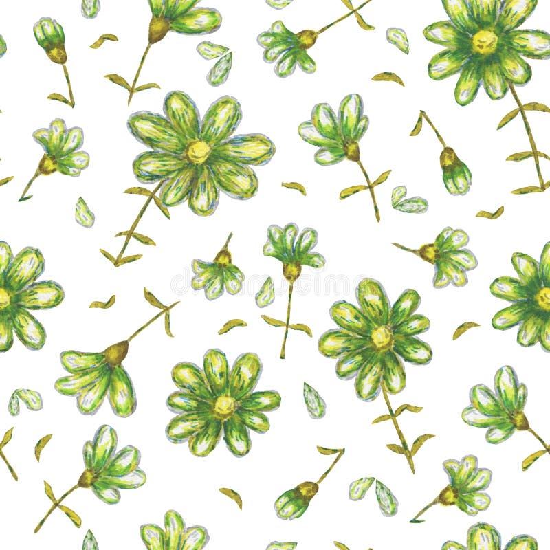 Flores dibujadas a mano sin fisuras, lápiz acuarela, margaritas verdes, flores silvestres, pintura botánica, dibujo de flores, p  libre illustration